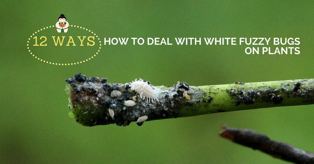 12 Ways on How to Deal with White Fuzzy Bugs on Plants - Sumo Gardener