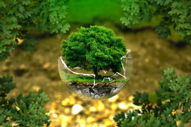 repot bonsai tree