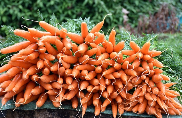 Carrots Fertilizer Requirements