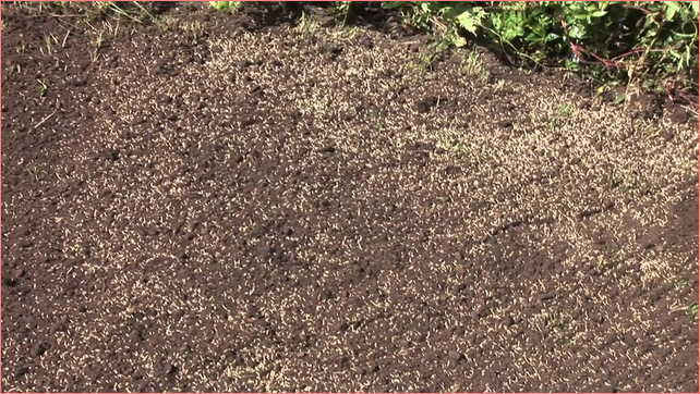 Watering Grass Seed How To Do It Right The First Time