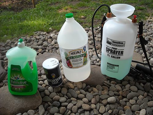 Weed control how to get rid of weeds the definitive guide - Get rid weeds using vinegar ...