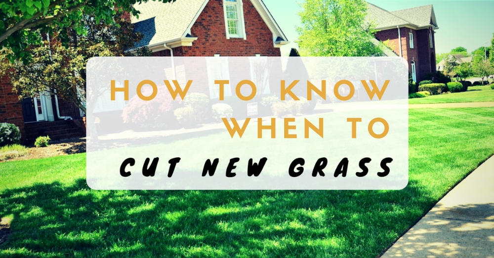How to know when to cut new grass