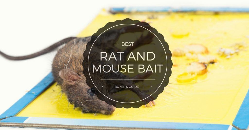 Best Rat and mouse bait reviews