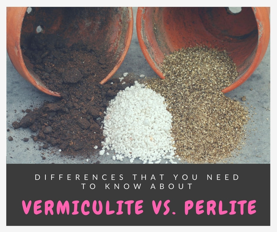 vermiculite vs. perlite: What're the differences?