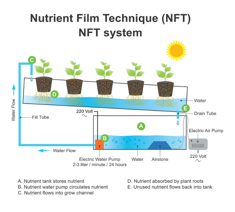 Nutrient Film Hydroponic System Technique