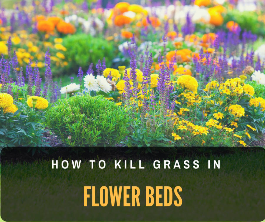 How to kill grass in flower beds