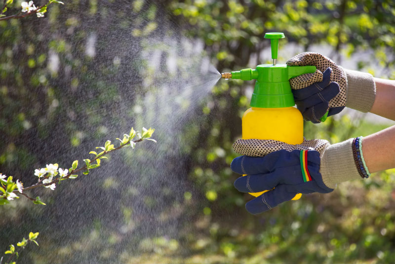how to get rid of red bugs in yard
