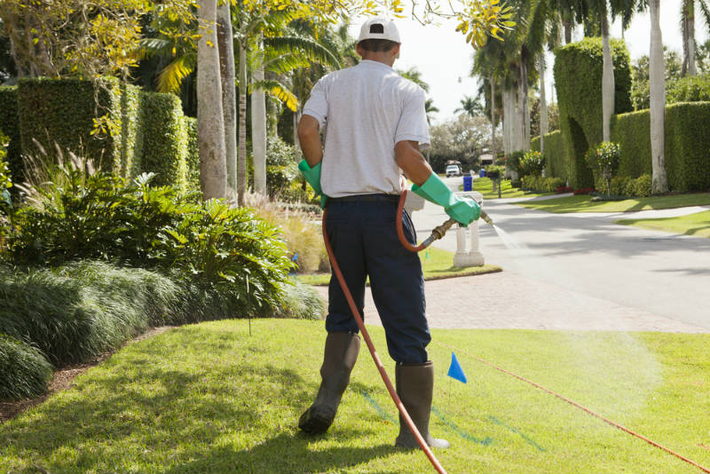 Avoid Using Pesticides in Your Lawn