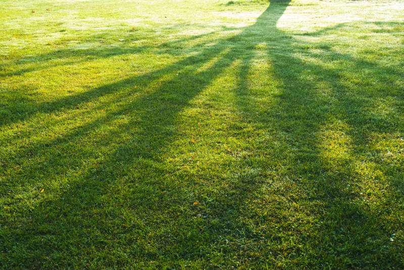 Shade Levels that Your Lawn Has