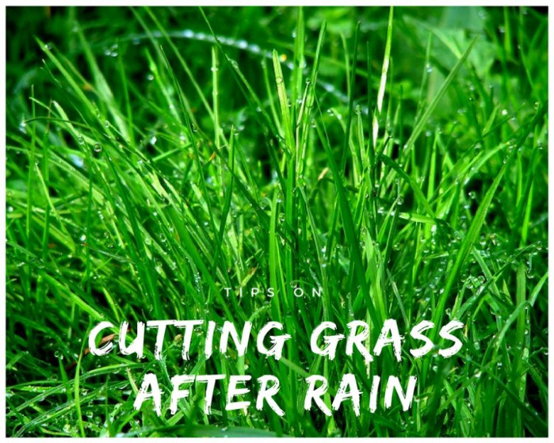 Tips On Cutting Grass After Rain Sumo Gardener