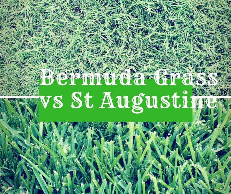 What is the difference between Bermuda grass vs St.Augustine Grass