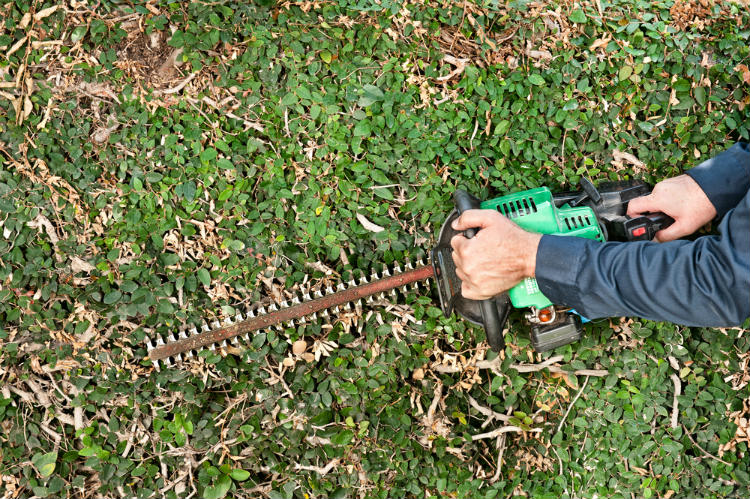 Gas Hedge Trimmer Blade