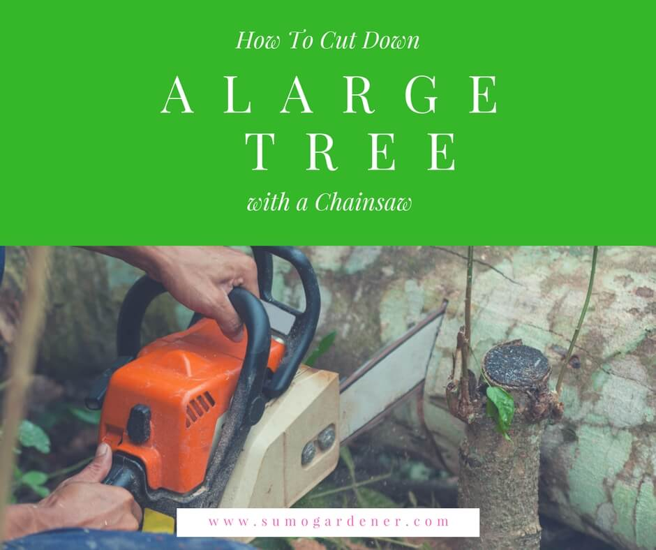 How To Cut Down A Large Tree With A Chainsaw