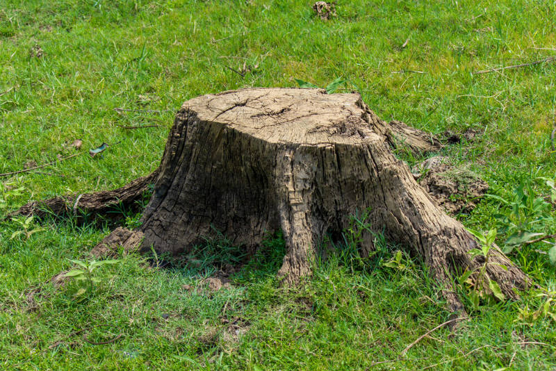 Remove the stump