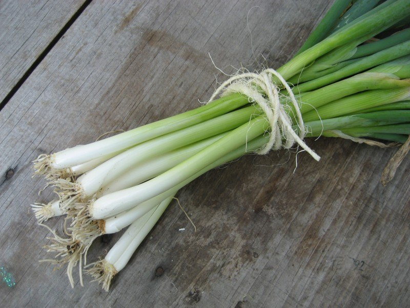 Evergreen Onion