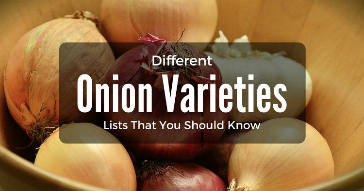 Different Onion Varieties Lists That You Should Know