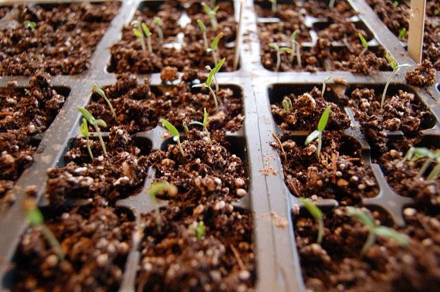 best soil for growing peppercorns