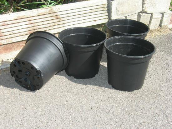 black pepper pot