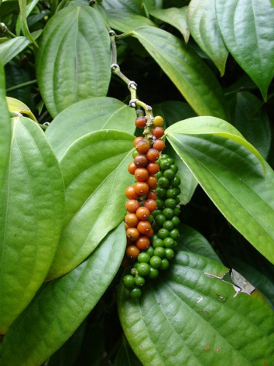fertilizers suited for peppercorns
