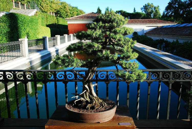 bonsai placement in spring summer and fall
