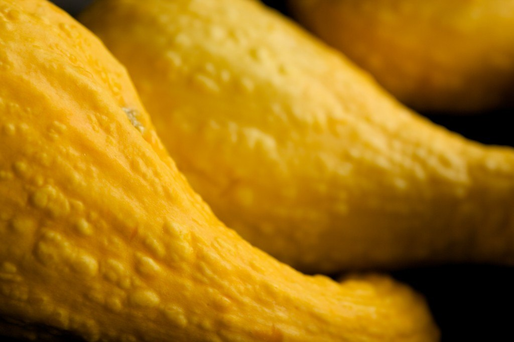crookneck squash with bumps on skin