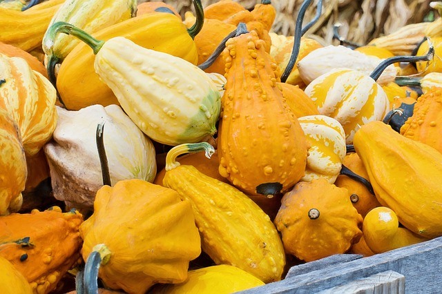 gourds with bumps on skin