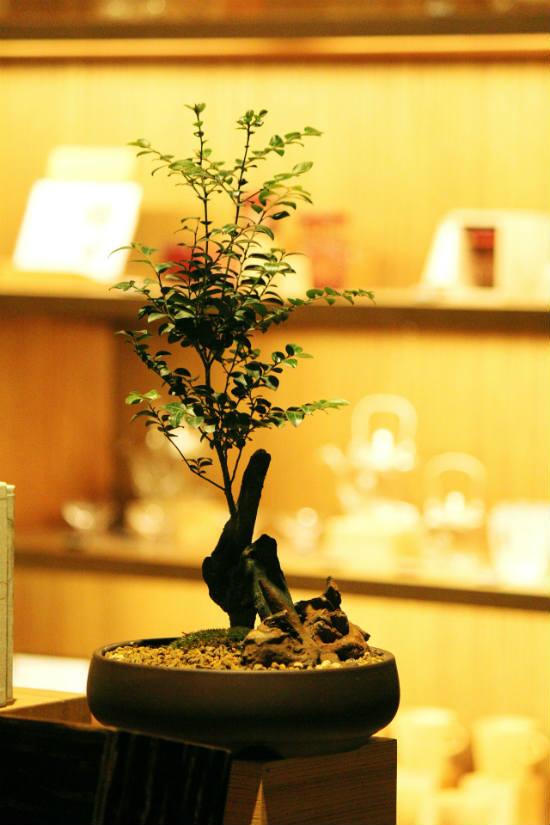water soluble fertilizer for bonsai tree