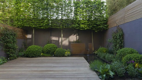 pleach trees for privacy