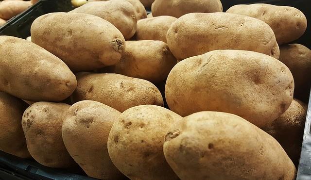 potato bountiful harvest