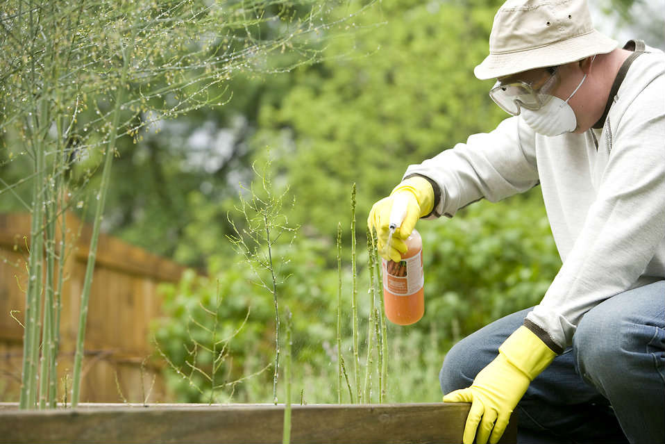 Spraying a pesticide
