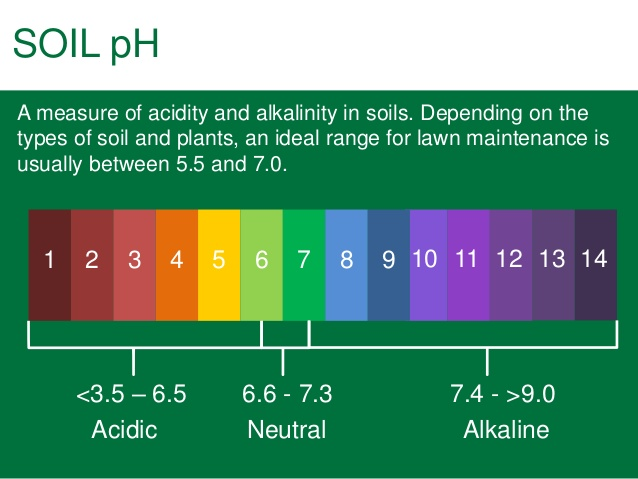 pH level in your soil