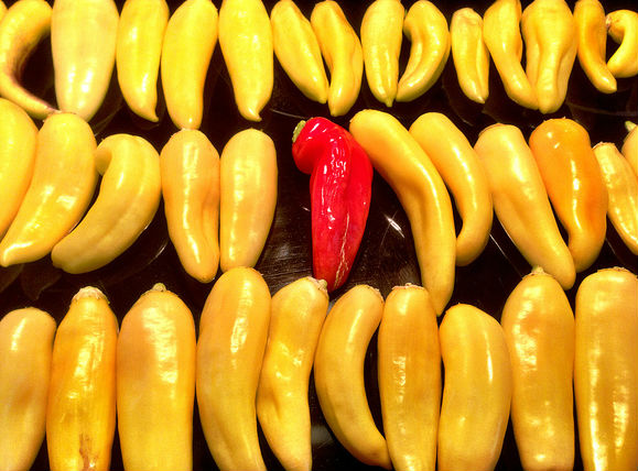 when to pick hot banana peppers