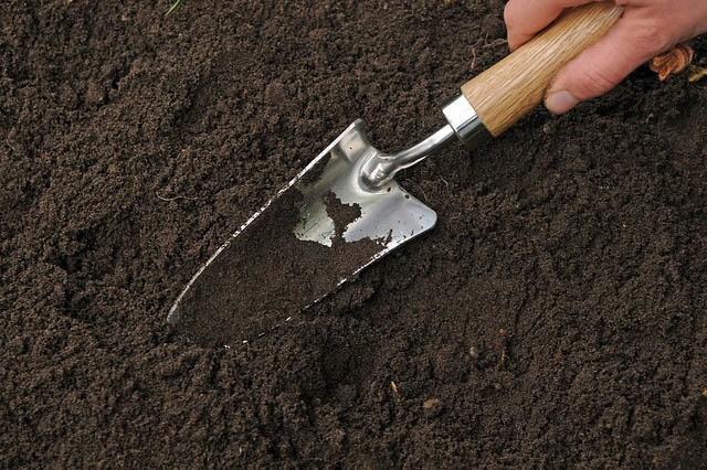 enriching soil before planting butter squash seeds