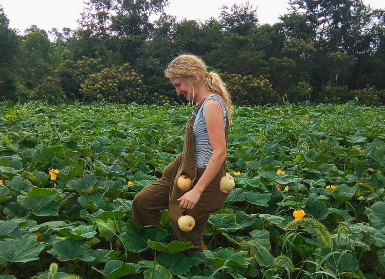 Harvesting your butternut squash