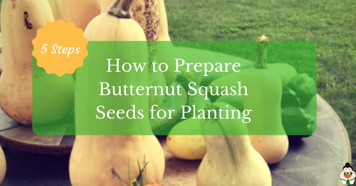 How To Prepare Butternut Squash Seeds For Planting 5 Steps
