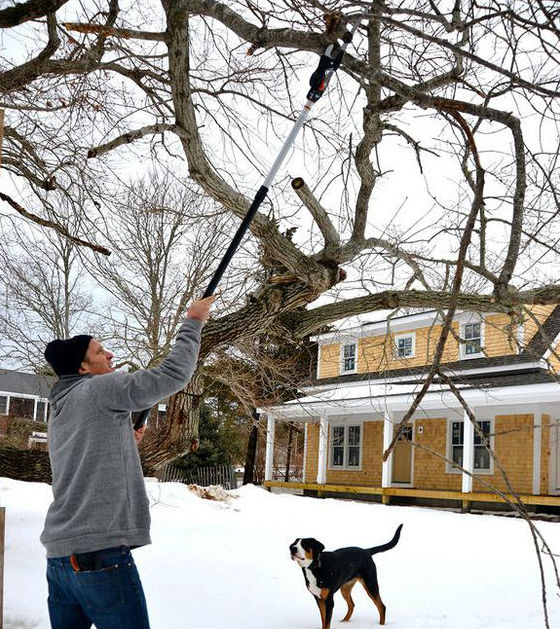 will a telescopic tree pruner suit you