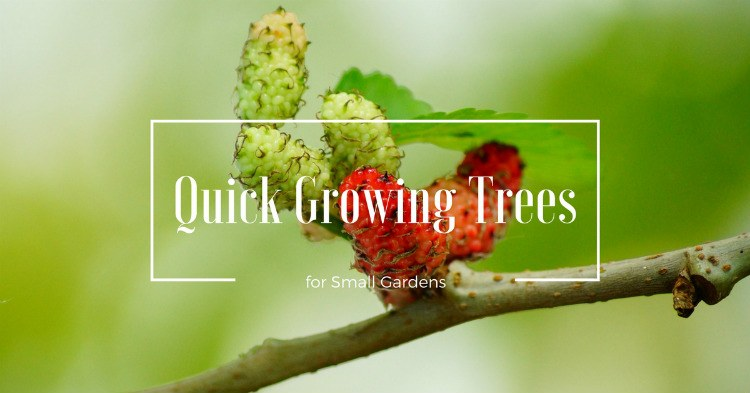 8 Different Quick Growing Trees for Small Gardens