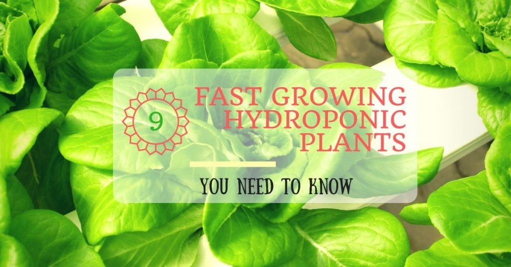 9 Fast Growing Hydroponic Plants