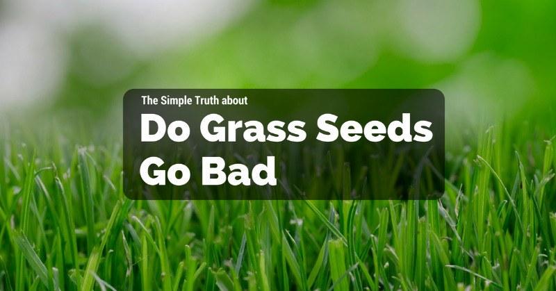 Do Grass Seeds Go Bad
