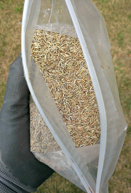 Seeds are relatively hardy and can survive up to five years in the correct storage conditions