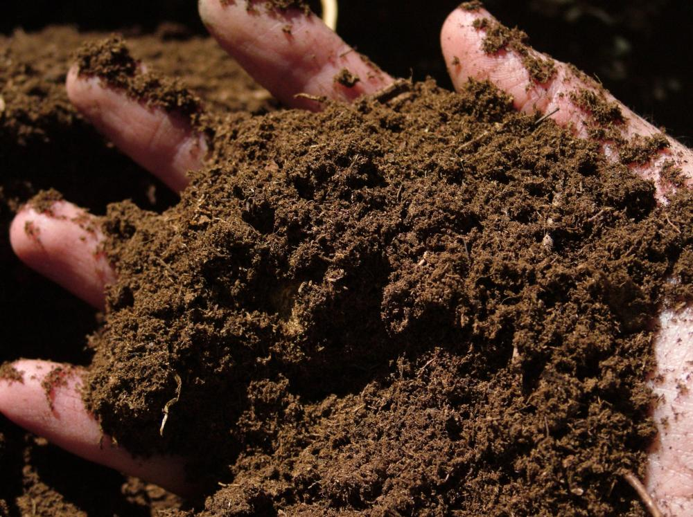 adding peat moss for growing portobello mushrooms at home