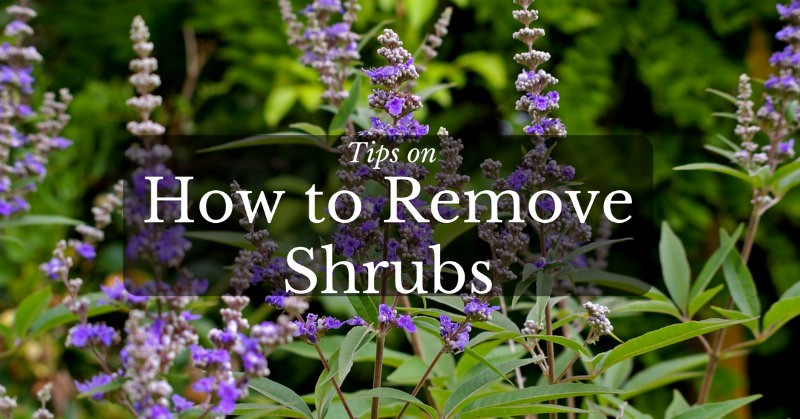 Tips on How to Remove Shrubs