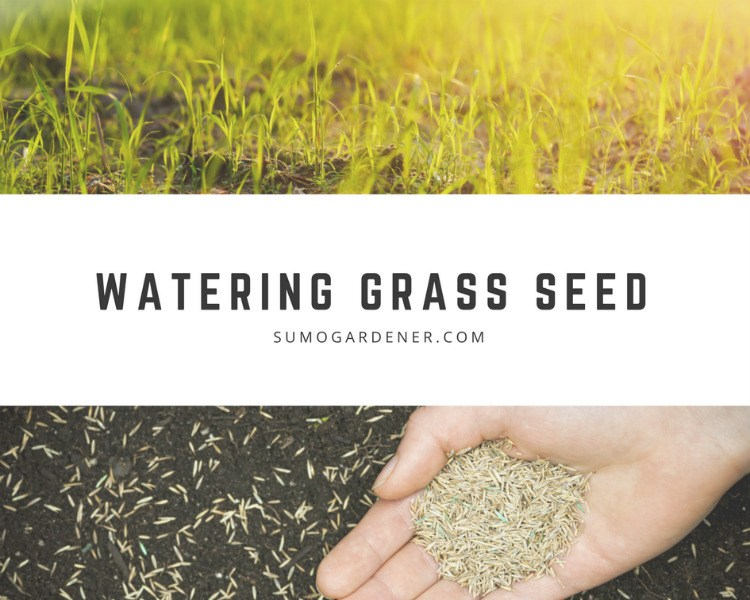 how often to water new grass seed