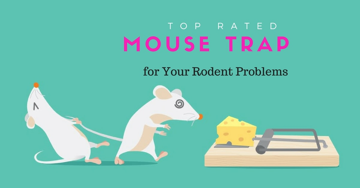 Best mouse trap reviews - Top rated