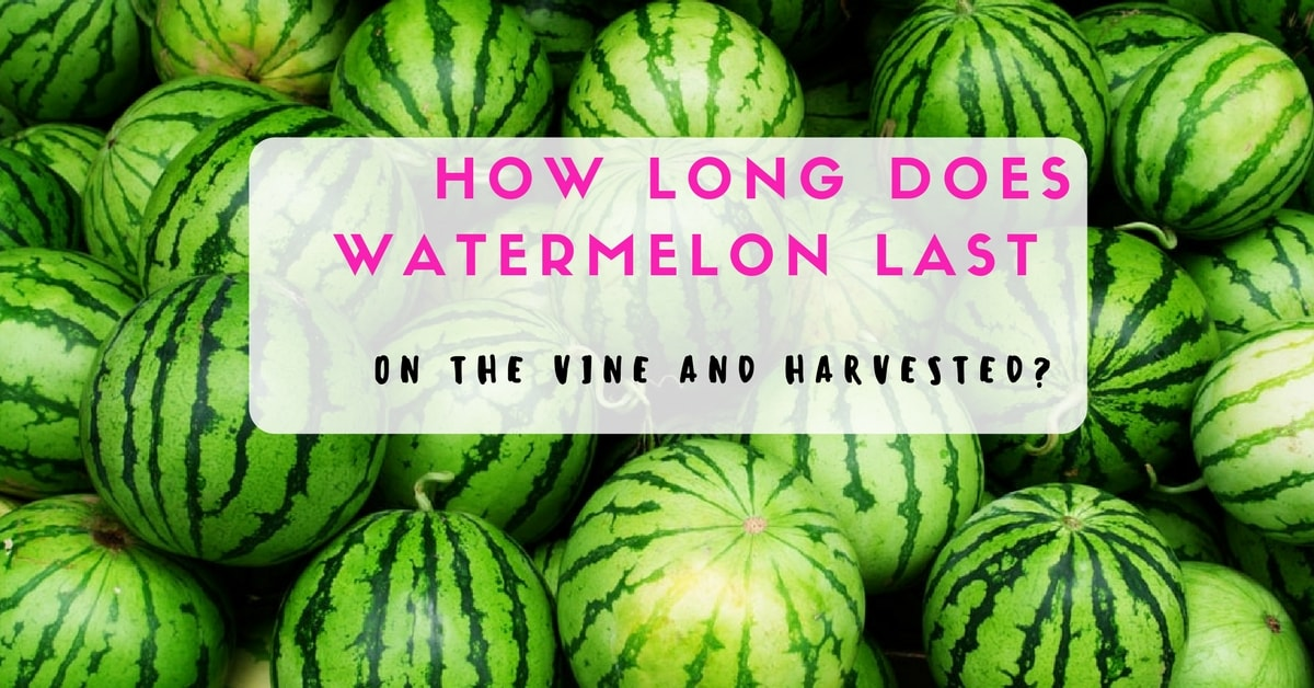 How long does watermelon last