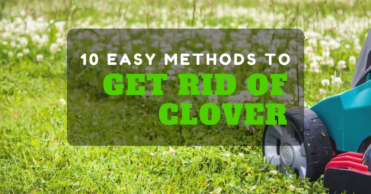 How to get rid of clover (10 easy methods)