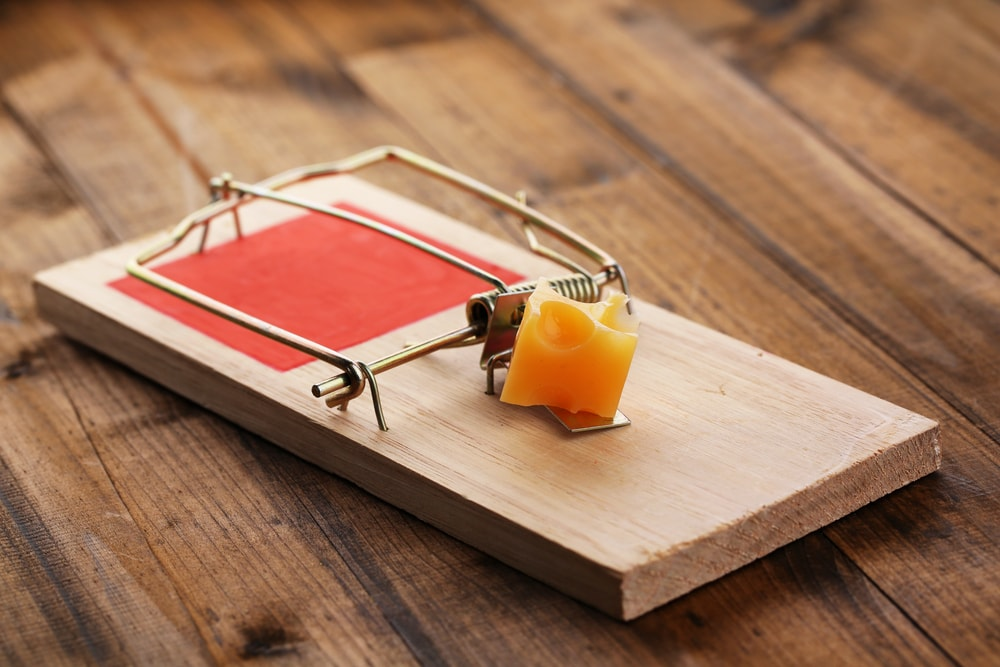 Tips on how to use mouse trap