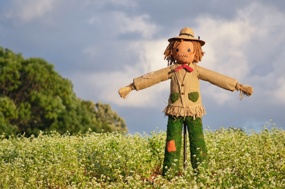 Create some Scare Tactics - scarecrows