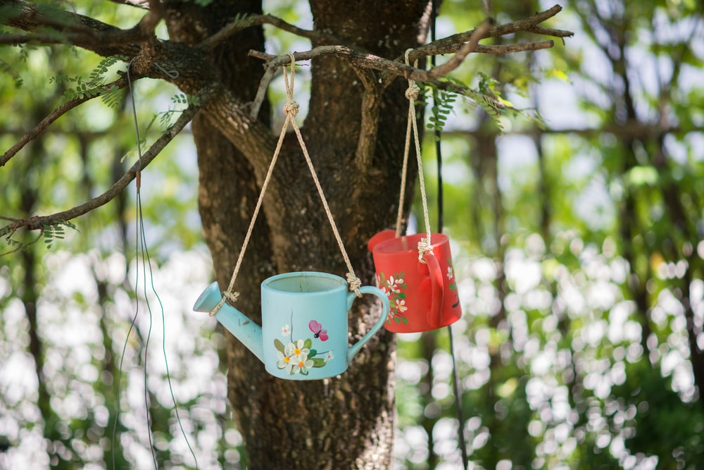 selecting a watering can