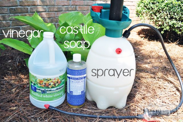 Best Weed Killer To Use In Flower Beds